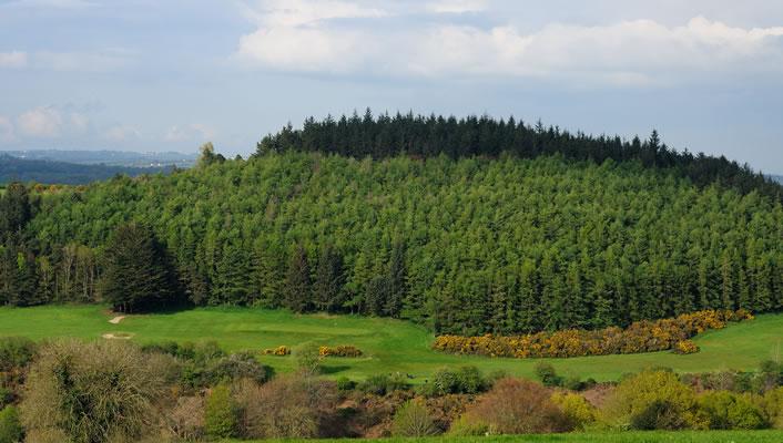 Forestry Careers Ireland Launches Schools Ambassador Programme